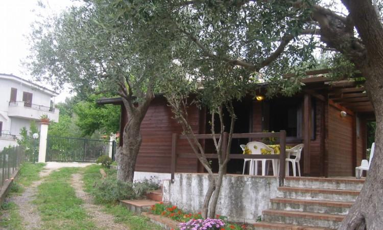 Cottage Mimosa