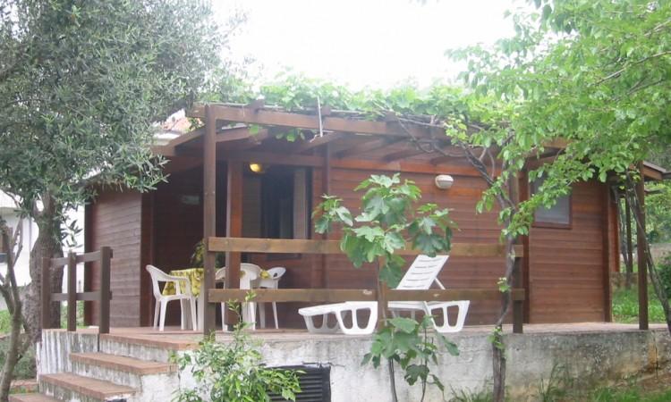 Cottage Primula